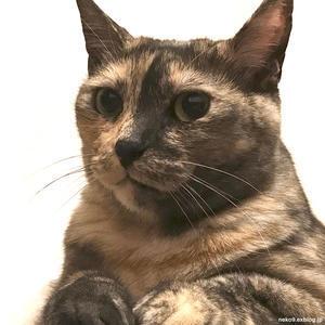 キューまた負けたの - 賃貸ネコ暮らし|賃貸住宅でネコを室内飼いする工夫