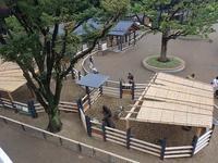 上野動物園:NEW子ども動物園すてっぷOPEN!! - 続々・動物園ありマス。