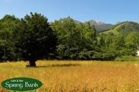 秋の気配が高原に。。。🍁 - 乗鞍高原カフェ&バー スプリングバンクの日記②
