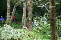 八ヶ岳大人の林間学校 ~木こり修行・カラマツの伐採~ - YUKKESCRAP
