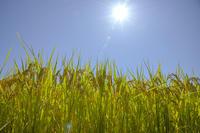 太陽の恵み - たなぼた