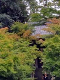 小雨の散策 北鎌倉 - E*N*JOY