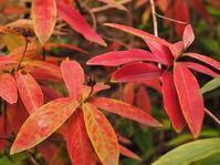秋色 - のーんびり hachisu 日記