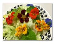 お花のサラダ - 雪割草 - Primula modesta -