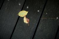 秋の合図 - フォトな日々
