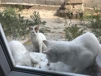 カッパドキアの猫エサ事情 - カッパドキアのデイジーオヤ・キリムバッグ店長日記