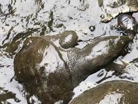 氷川神社の池で襲われた - 幸せを探しだすこぶた