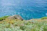 神威岬に咲く@北海道 - カメラをもってふらふらと