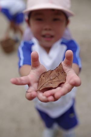 秋の宝物。?終? - 陽だまりの小窓 - 菊の花幼稚園保育のようす