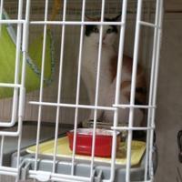 めも(しょうぶ、美月退院、里子ちゃん里帰り) - ゆきももこの猫夢日記