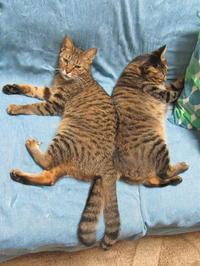 陽菜と小鉄 - 世帯主は猫なんです。