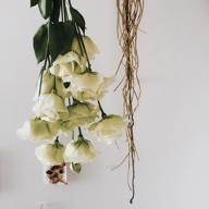 花と向き合う - peu a peu