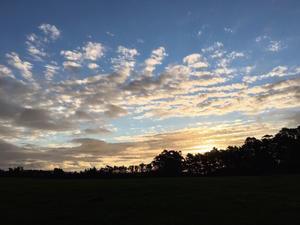 夕暮れ時とフィリス/ Today's Sunset and Phillis - アメリカからニュージーランドへ