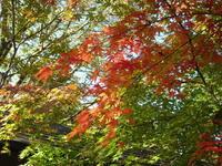 黒川温泉の秋 - 信仙のブログ