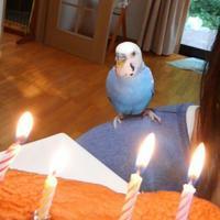 ぴーちゃんのお誕生日 - Yo3*気ままにHandmade Days