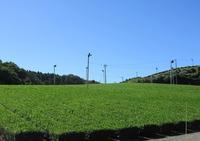 潮騒橋(掛川市)・御前崎海岸 - 山の花、町の花