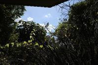 台風一過の朝の空はなぜこんなに青いのだろう - 生きる歓び Plaisir de Vivre。人生はつらし、されど愉しく美しく