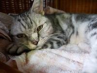 華ちゃんのレッスン - ご機嫌元氣 猫の森公式ブログ