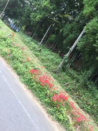 秋の花 - 小径を辿る