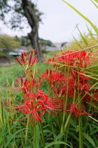 色を求めて - katsuのヘタッピ風景