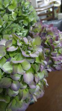 秋色紫陽花と葡萄食べ比べ - Cozyで楽しい暮らしに憧れて♪