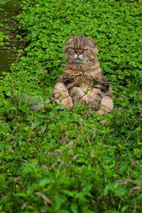 夏から秋へ 猫編 - ちーの助が行く