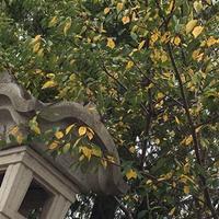 秋 枯れ葉 - あるがままに 楽しむ