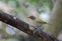 今日の鳥見(2017年9月21日) - ほとんど野鳥写真日記