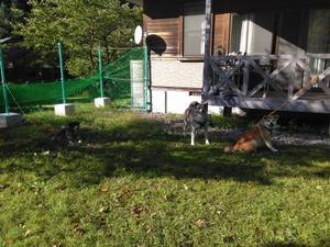 秋田で過ごす夜 - もももの部屋(家族を待っている保護犬たちと我家の愛犬のブログです)