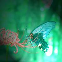 緑と - 三恵 poem  art