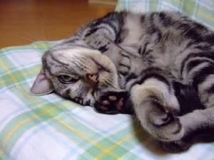 夜の猫ベッド -