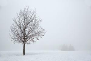 1119♪ モンポウ『雪』 - 谷めぐみ~スペインの心を歌う~
