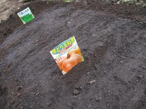 玉ねぎの種蒔きました^^ - 畑へ行こう♪