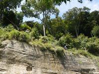 超凄腕の木こりと龍隠庵Ⅴ①命綱付けて崖上を下刈り9・19 - 北鎌倉湧水ネットワーク