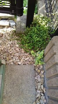 緑のカーテンな植物 - 放浪記