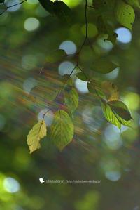 秋の足音 - お花びより