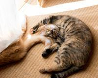 チャルさん(のシッポ)好き好き! - 猫と夕焼け