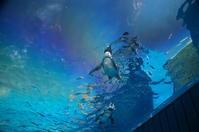 ペンギンアート展、ありがとうございました! - 陶房呑器ののんびり日記