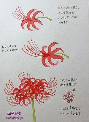 彼岸花2(描き方) - 水の色時間