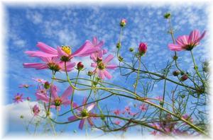 秋の花といえば…♪ - 素敵ゆったり田舎暮らし<2>