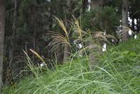 野に咲く花のように 風に吹かれて♪ - 花・tuzuri