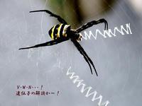 【蜘蛛の糸の造形】 -  蜘蛛 -  ★ 野草デジカメ日記★