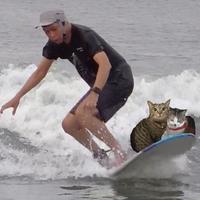 猫サーファー - ねねここワンダーランド