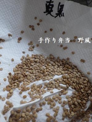 祝!仙台長なすの初自家採種と今後のブログとSNSの運営方針について -