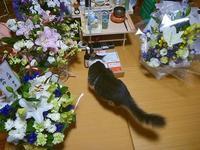 9/22(金) - アメタロウ・ダイアリー