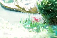 池の畔に - jumhina biyori*