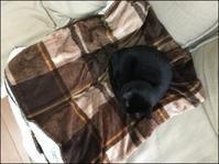 毛布 - あずきのばあばの、のんびり日記