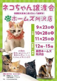猫の譲渡会へ行ってみませんか?(2017.9.22) - きよせ猫耳の会(旧 飼い主のいない猫を考える会)