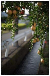 散歩向日町-105 - Hare's Photolog