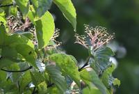 2017年9月 - 青梅から花鳥風景